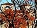 Обзорные туры Отели Болгария 2